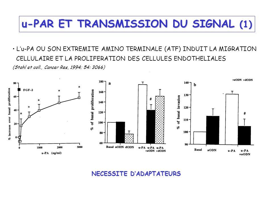 u-PAR ET TRANSMISSION DU SIGNAL (1) Lu-PA OU SON EXTREMITE AMINO TERMINALE (ATF) INDUIT LA MIGRATION CELLULAIRE ET LA PROLIFERATION DES CELLULES ENDOT