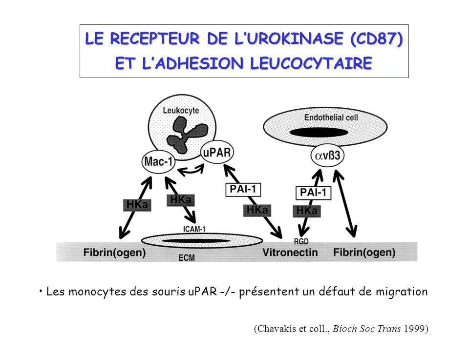 LE RECEPTEUR DE LUROKINASE (CD87) ET LADHESION LEUCOCYTAIRE (Chavakis et coll., Bioch Soc Trans 1999) Les monocytes des souris uPAR -/- présentent un