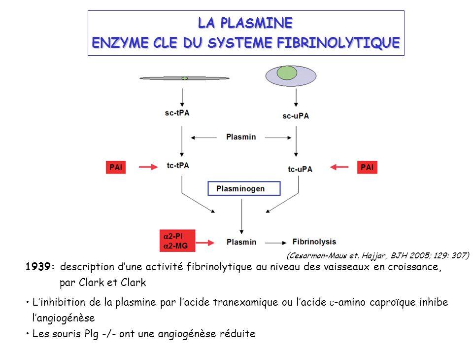 LA PLASMINE ENZYME CLE DU SYSTEME FIBRINOLYTIQUE 1939: description dune activité fibrinolytique au niveau des vaisseaux en croissance, par Clark et Cl
