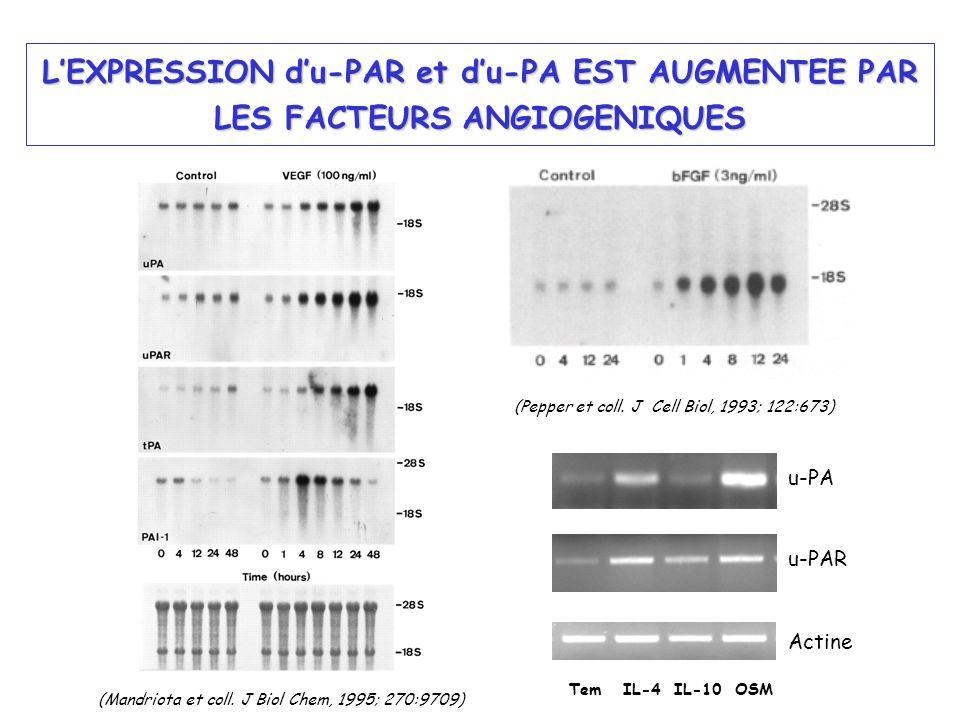 LEXPRESSION du-PAR et du-PA EST AUGMENTEE PAR LES FACTEURS ANGIOGENIQUES (Mandriota et coll. J Biol Chem, 1995; 270:9709) Tem IL-4 IL-10 OSM u-PA u-PA