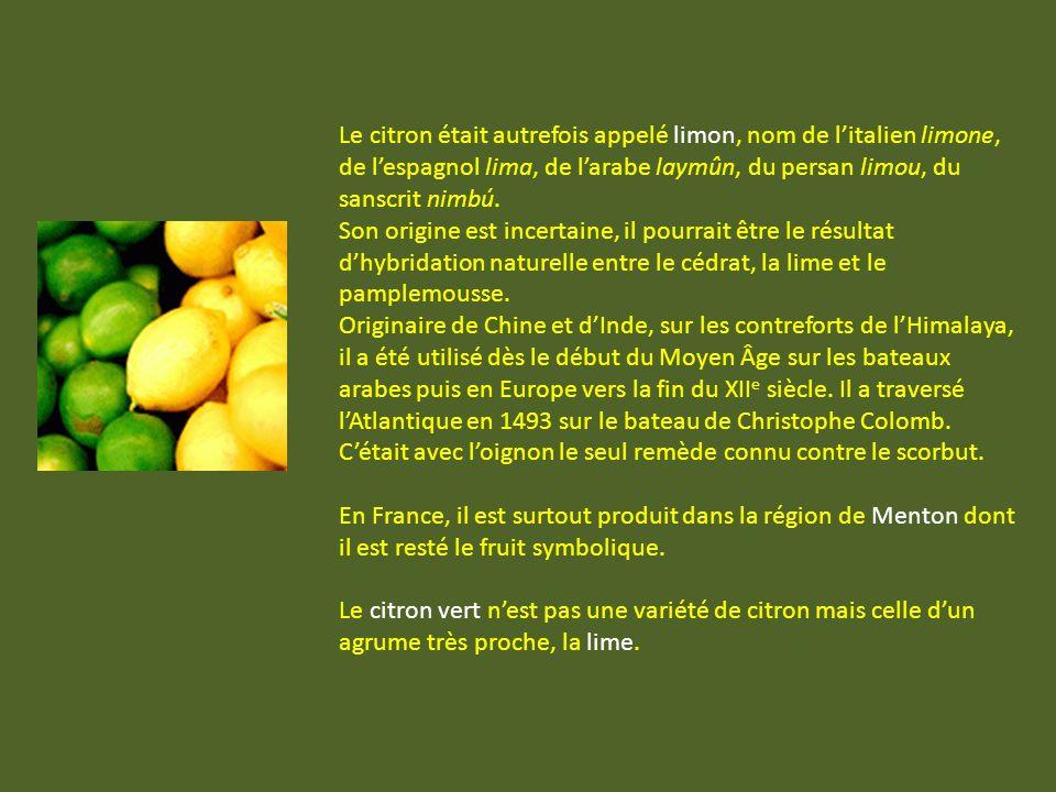Le citron était autrefois appelé limon, nom de litalien limone, de lespagnol lima, de larabe laymûn, du persan limou, du sanscrit nimbú.