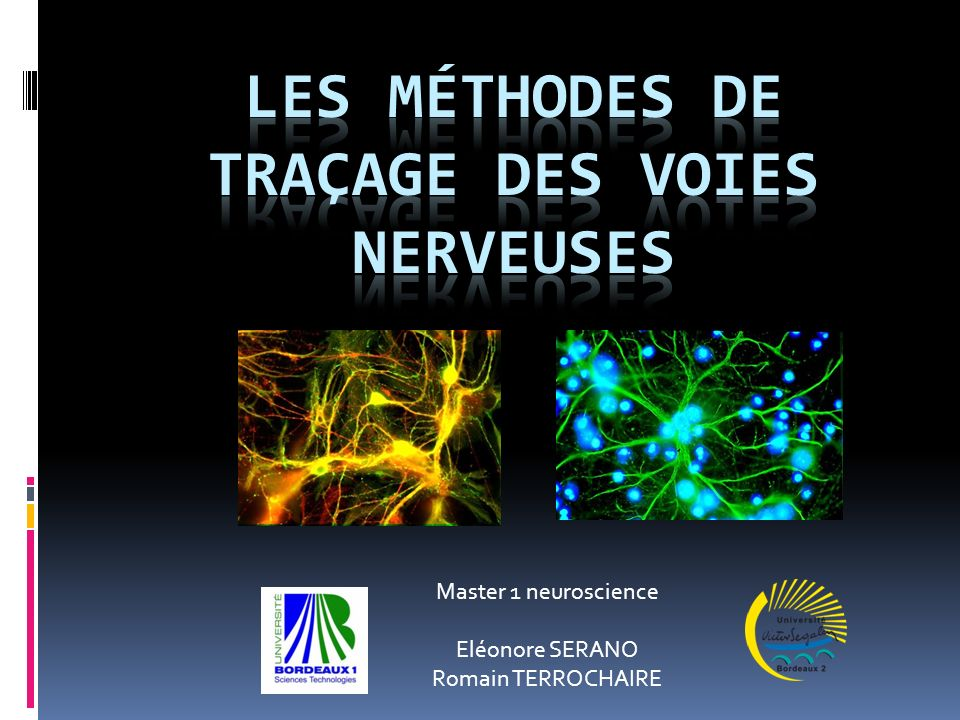 Master 1 neuroscience Eléonore SERANO Romain TERROCHAIRE