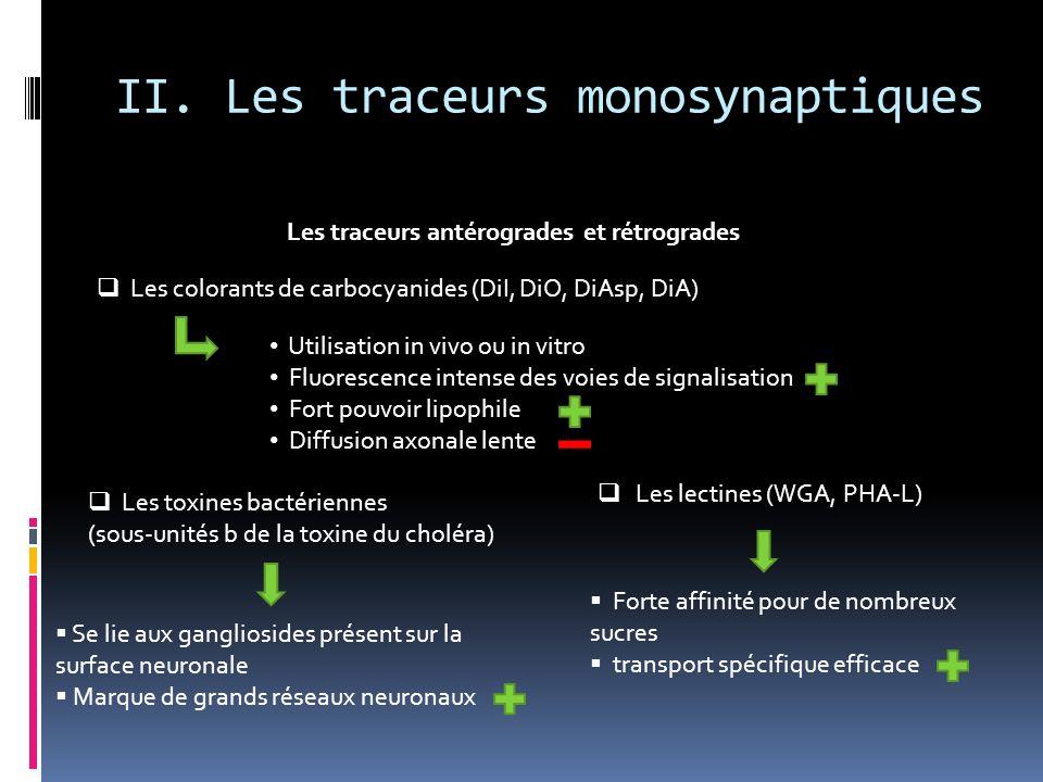 II. Les traceurs monosynaptiques Les traceurs antérogrades et rétrogrades Les colorants de carbocyanides (DiI, DiO, DiAsp, DiA) Les toxines bactérienn