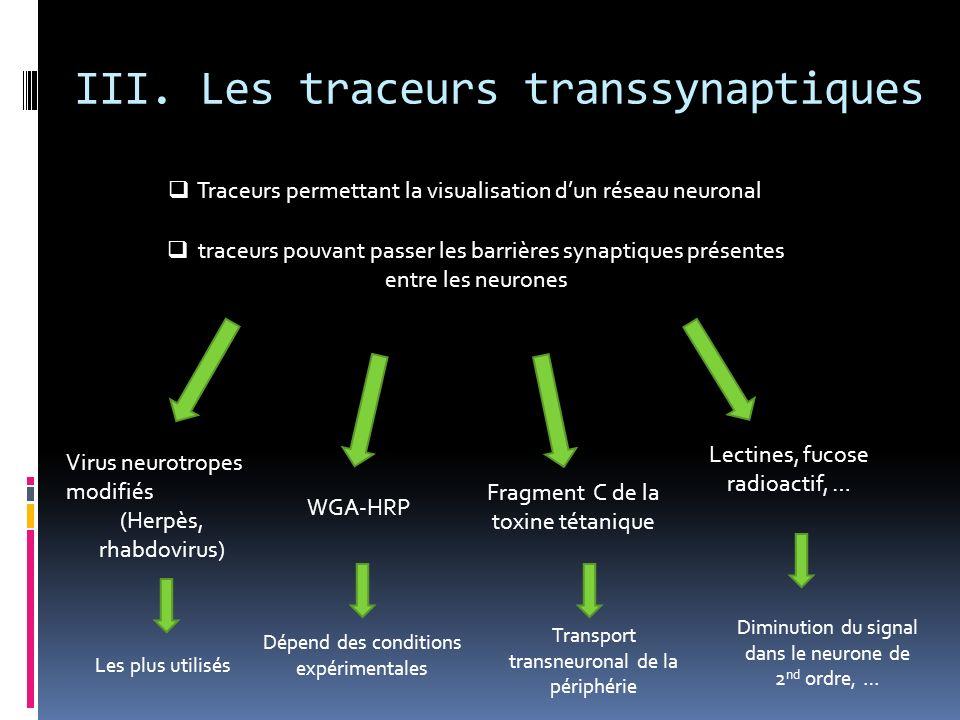 III. Les traceurs transsynaptiques Traceurs permettant la visualisation dun réseau neuronal traceurs pouvant passer les barrières synaptiques présente