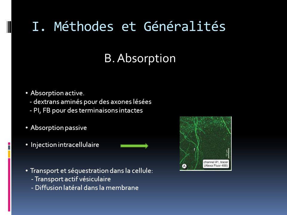 I. Méthodes et Généralités Absorption active. - dextrans aminés pour des axones lésées - PI, FB pour des terminaisons intactes Absorption passive Inje