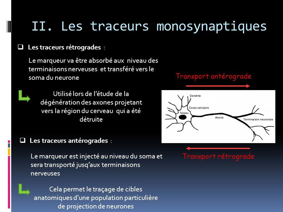 II. Les traceurs monosynaptiques Les traceurs rétrogrades : Transport antérograde Transport rétrograde Le marqueur va être absorbé aux niveau des term