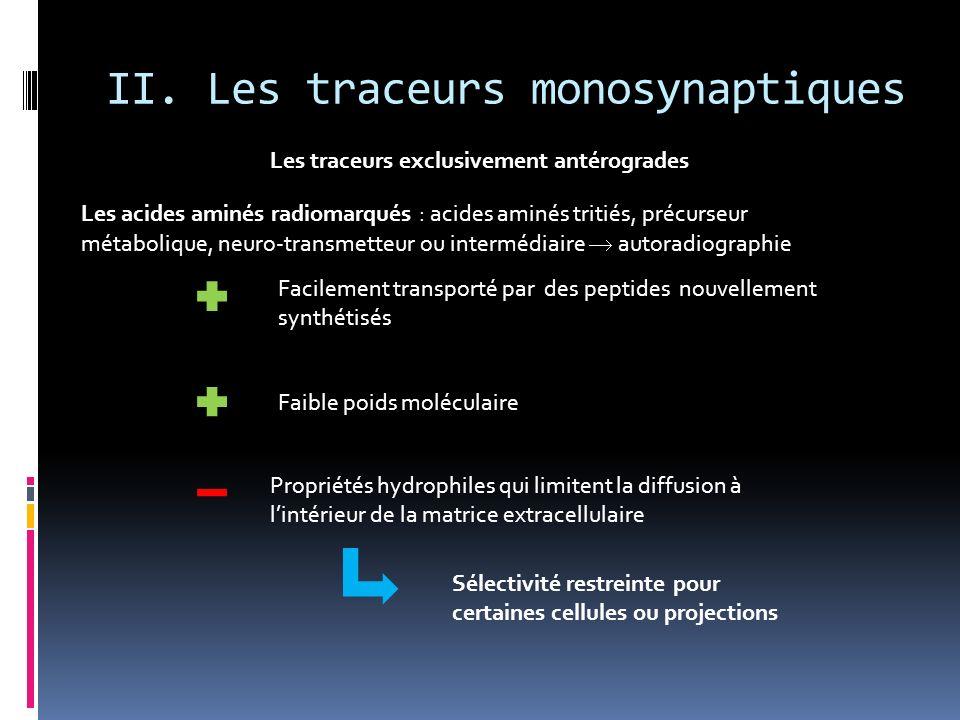 II. Les traceurs monosynaptiques Les traceurs exclusivement antérogrades Les acides aminés radiomarqués : acides aminés tritiés, précurseur métaboliqu