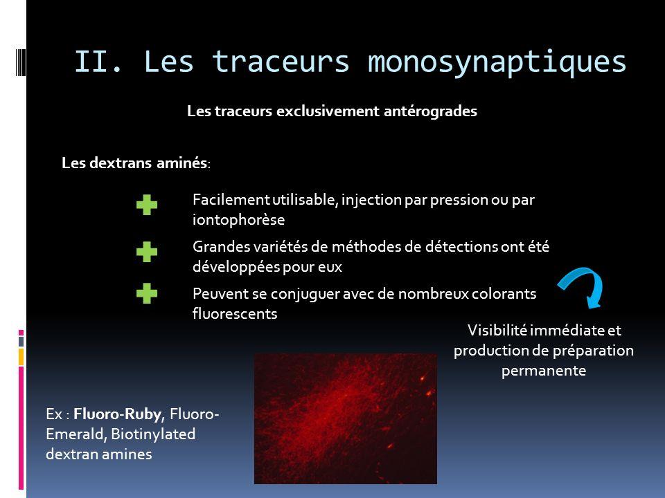 II. Les traceurs monosynaptiques Les traceurs exclusivement antérogrades Les dextrans aminés: Facilement utilisable, injection par pression ou par ion