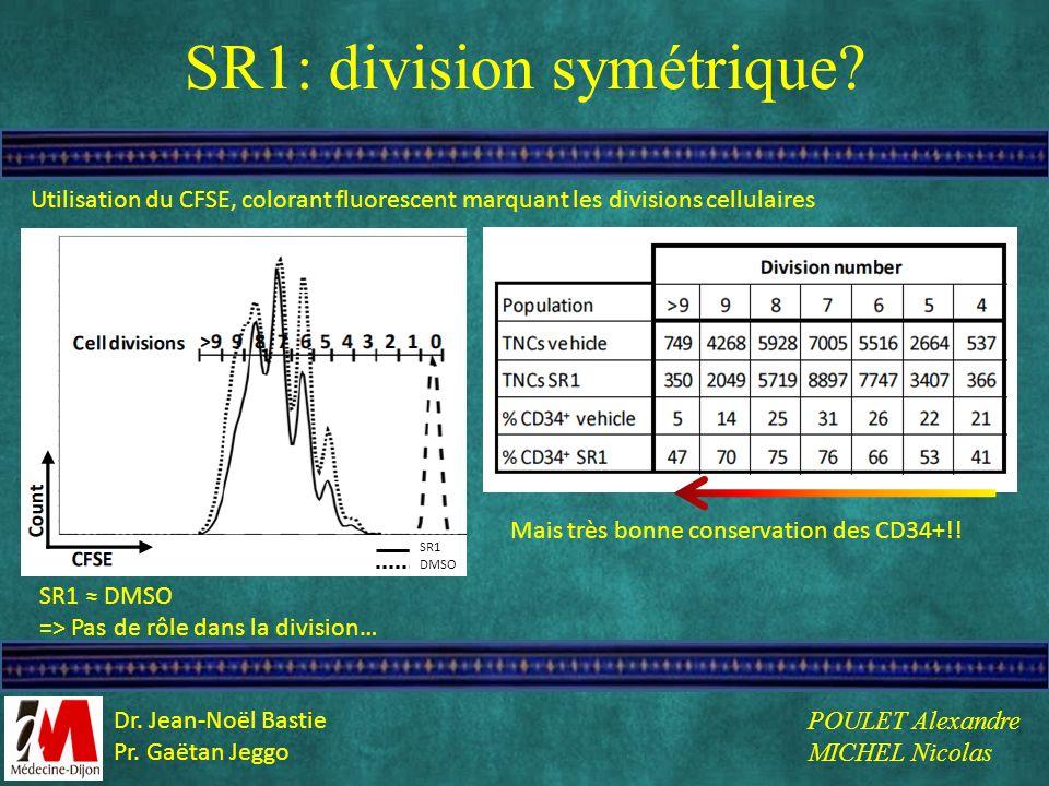 SR1: division symétrique? SR1 DMSO => Pas de rôle dans la division… Mais très bonne conservation des CD34+!! Utilisation du CFSE, colorant fluorescent