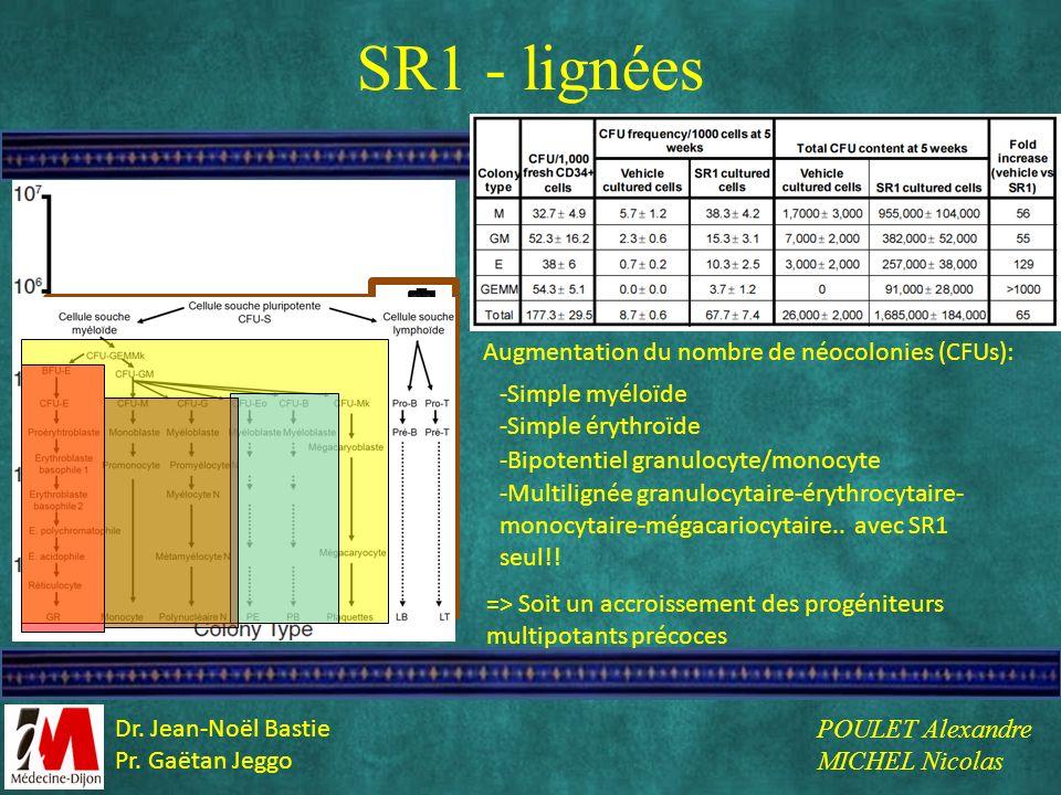 SR1 - lignées Augmentation du nombre de néocolonies (CFUs): -Simple myéloïde => Soit un accroissement des progéniteurs multipotants précoces -Simple é