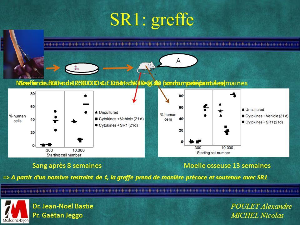 SR1: greffe Sang après 8 semainesMoelle osseuse 13 semaines => A partir dun nombre restreint de ¢, la greffe prend de manière précoce et soutenue avec