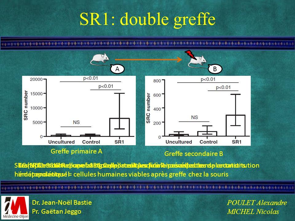 SR1: double greffe SRC (NOD-SCID Repopulating Cells) : cellules humaines capables de reconstitution hématopoïétique = cellules humaines viables après