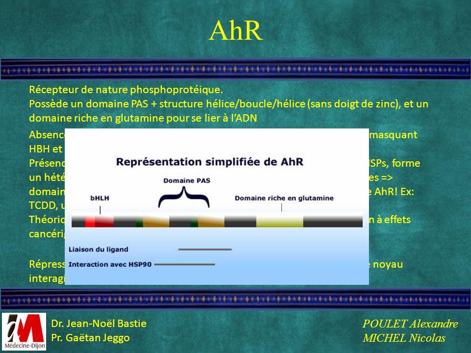 AhR Récepteur de nature phosphoprotéique. Possède un domaine PAS + structure hélice/boucle/hélice (sans doigt de zinc), et un domaine riche en glutami