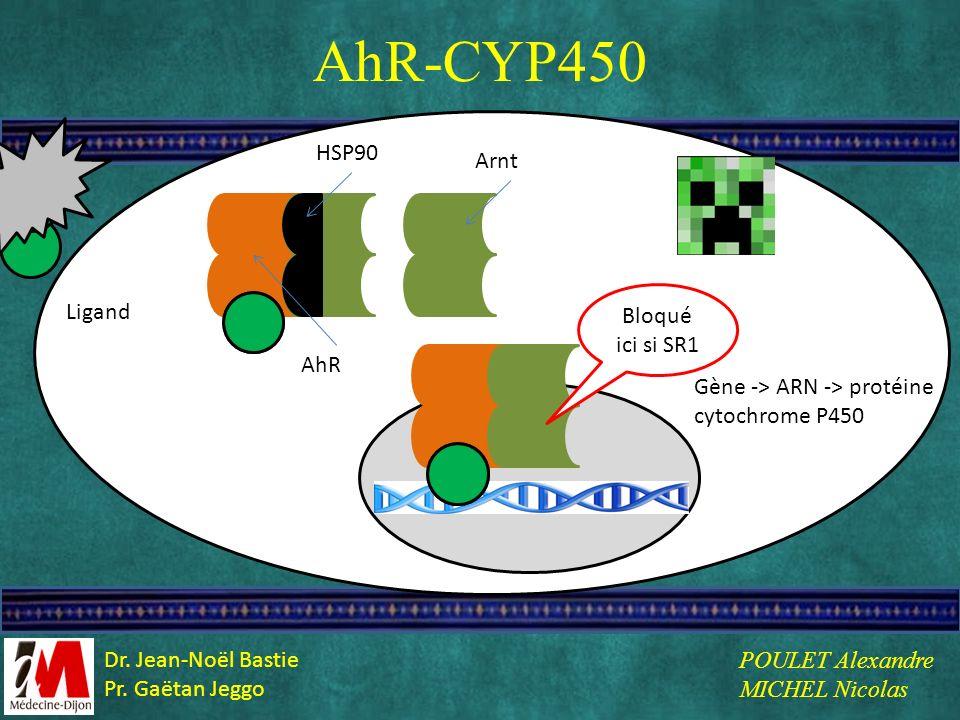 L AhR-CYP450 Ligand HSP90 AhR Arnt Gène -> ARN -> protéine cytochrome P450 Bloqué ici si SR1 POULET Alexandre MICHEL Nicolas Dr. Jean-Noël Bastie Pr.