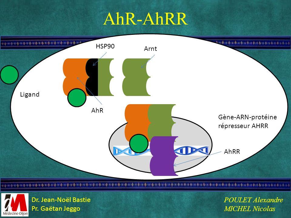 L AhR-AhRR Ligand HSP90 AhR Arnt Gène-ARN-protéine répresseur AHRR AhRR POULET Alexandre MICHEL Nicolas Dr. Jean-Noël Bastie Pr. Gaëtan Jeggo