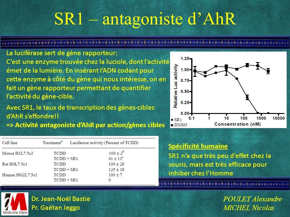 SR1 – antagoniste dAhR La luciférase sert de gène rapporteur: Cest une enzyme trouvée chez la luciole, dont lactivité émet de la lumière. En insérant