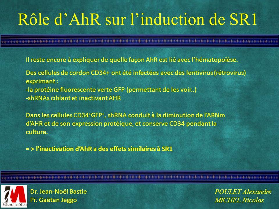 Rôle dAhR sur linduction de SR1 Il reste encore à expliquer de quelle façon AhR est lié avec lhématopoïèse. Des cellules de cordon CD34+ ont été infec