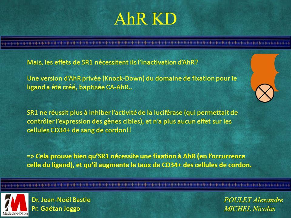 AhR KD Mais, les effets de SR1 nécessitent ils linactivation dAhR? Une version dAhR privée (Knock-Down) du domaine de fixation pour le ligand a été cr
