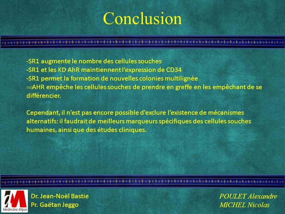 Conclusion -SR1 augmente le nombre des cellules souches -SR1 et les KD AhR maintiennent lexpression de CD34 -SR1 permet la formation de nouvelles colo
