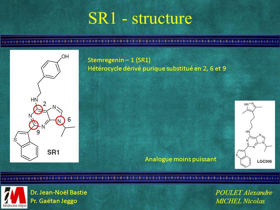 SR1 - structure Stemregenin – 1 (SR1) 2 6 9 Analogue moins puissant Hétérocycle dérivé purique substitué en 2, 6 et 9 POULET Alexandre MICHEL Nicolas