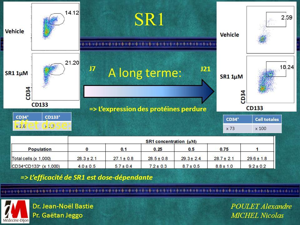 SR1 J7 J21 => Lefficacité de SR1 est dose-dépendante => Lexpression des protéines perdure A long terme: CD34 + CD133 + x 2,6x 2,3 Effet dose: CD34 + C