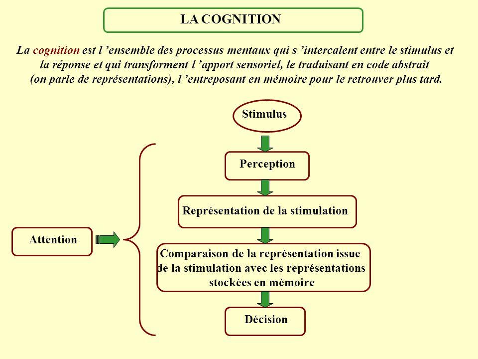 La cognition est l ensemble des processus mentaux qui s intercalent entre le stimulus et la réponse et qui transforment l apport sensoriel, le traduis