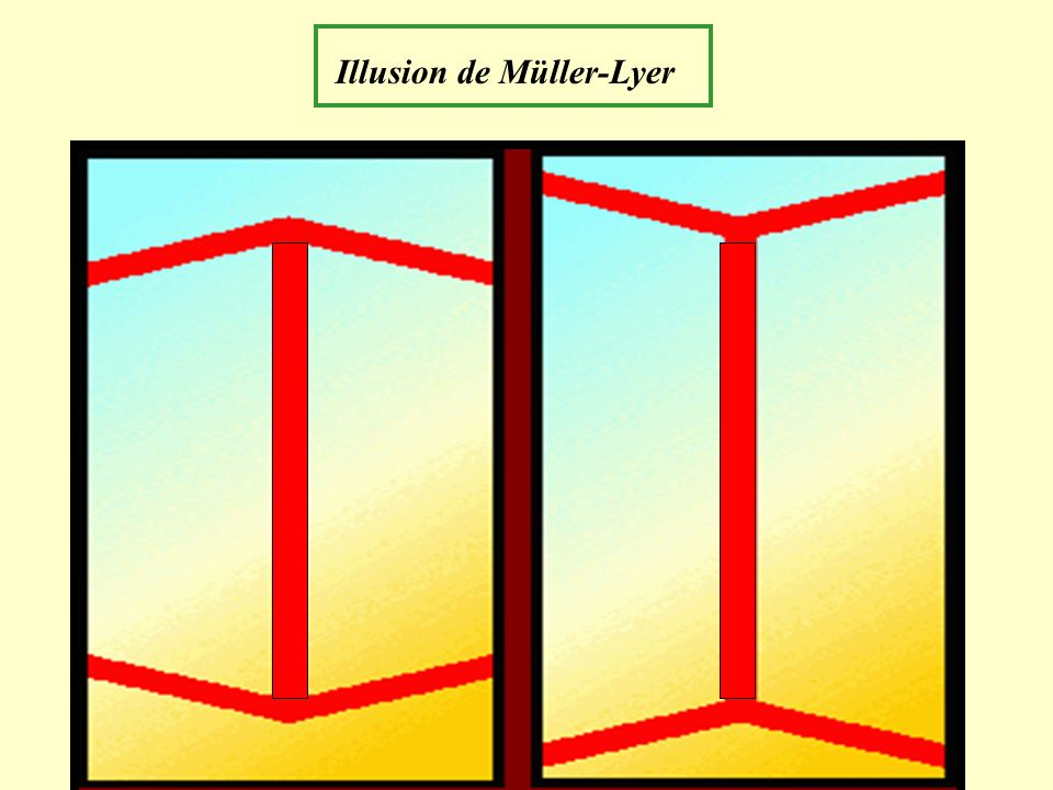 Illusion de Müller-Lyer