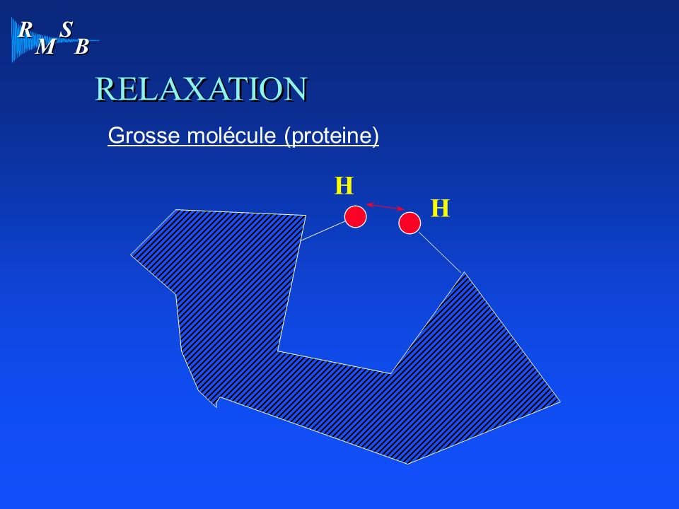 R M S B RELAXATION Grosse molécule (proteine) H H