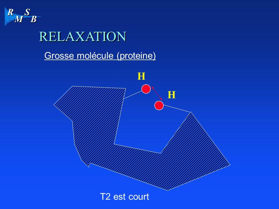 R M S B H RELAXATION H T2 est court Grosse molécule (proteine)
