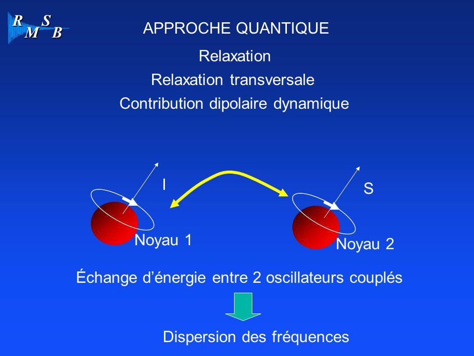 R M S B APPROCHE QUANTIQUE Relaxation Relaxation transversale Contribution dipolaire dynamique I Noyau 1 S Noyau 2 Échange dénergie entre 2 oscillateu