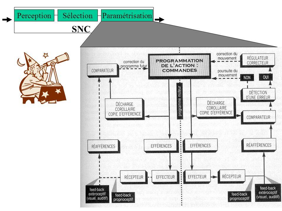 8 SNC SélectionParamétrisationPerception