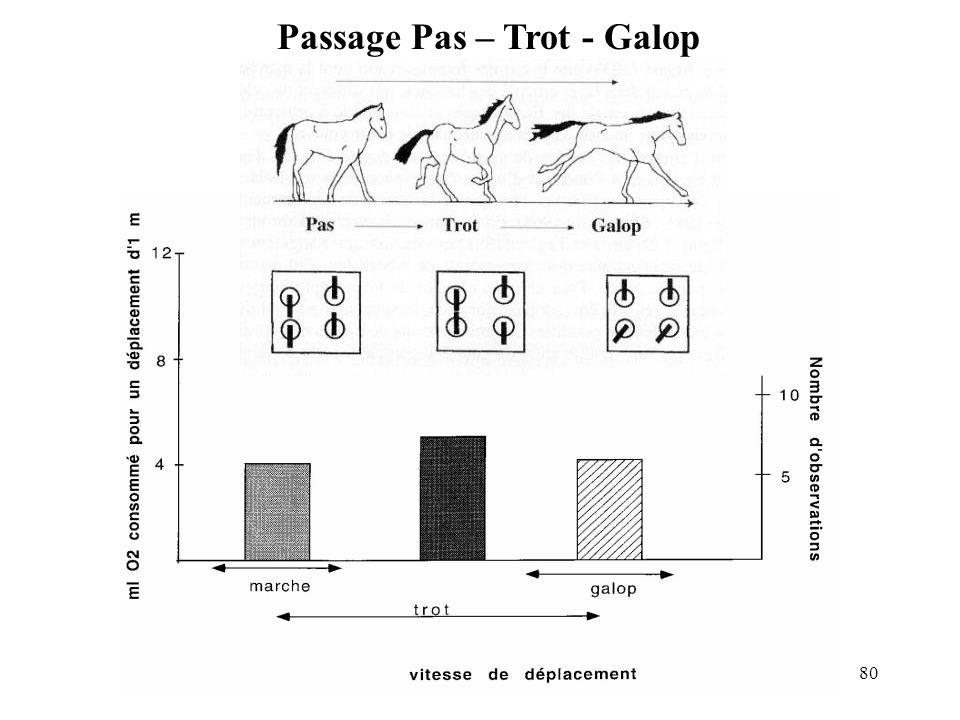 80 Passage Pas – Trot - Galop
