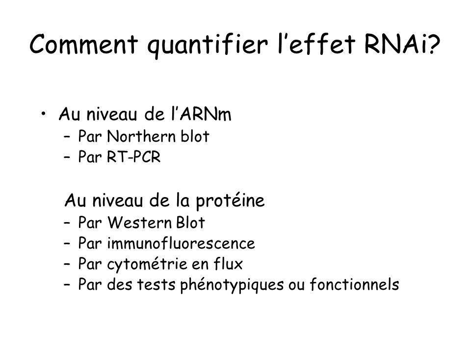 Comment quantifier leffet RNAi? Au niveau de lARNm –Par Northern blot –Par RT-PCR Au niveau de la protéine –Par Western Blot –Par immunofluorescence –