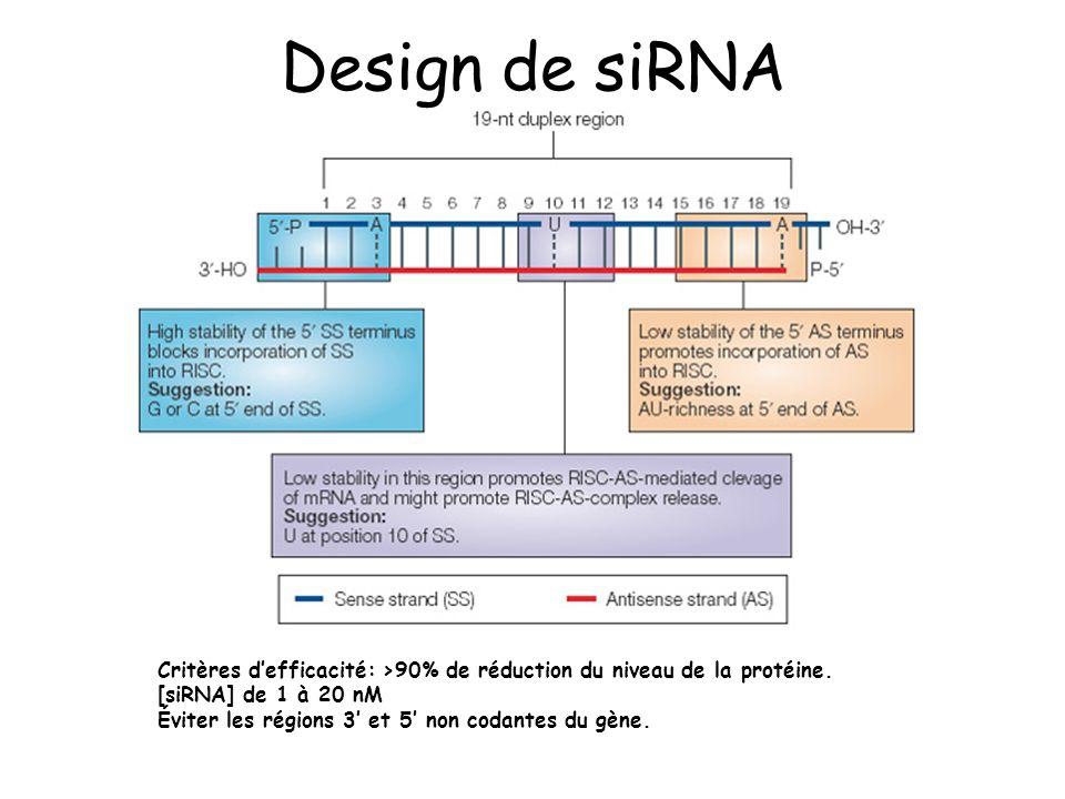 Design de siRNA Critères defficacité: >90% de réduction du niveau de la protéine. [siRNA] de 1 à 20 nM Éviter les régions 3 et 5 non codantes du gène.
