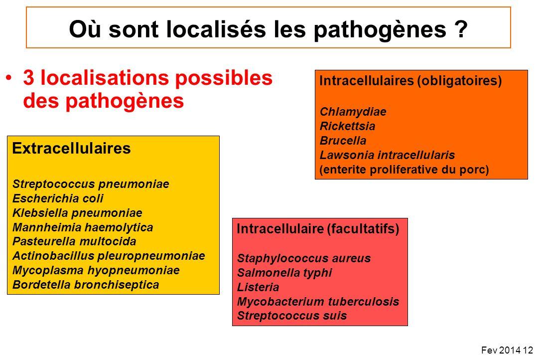 Où sont localisés les pathogènes ? 3 localisations possibles des pathogènes Extracellulaires Streptococcus pneumoniae Escherichia coli Klebsiella pneu