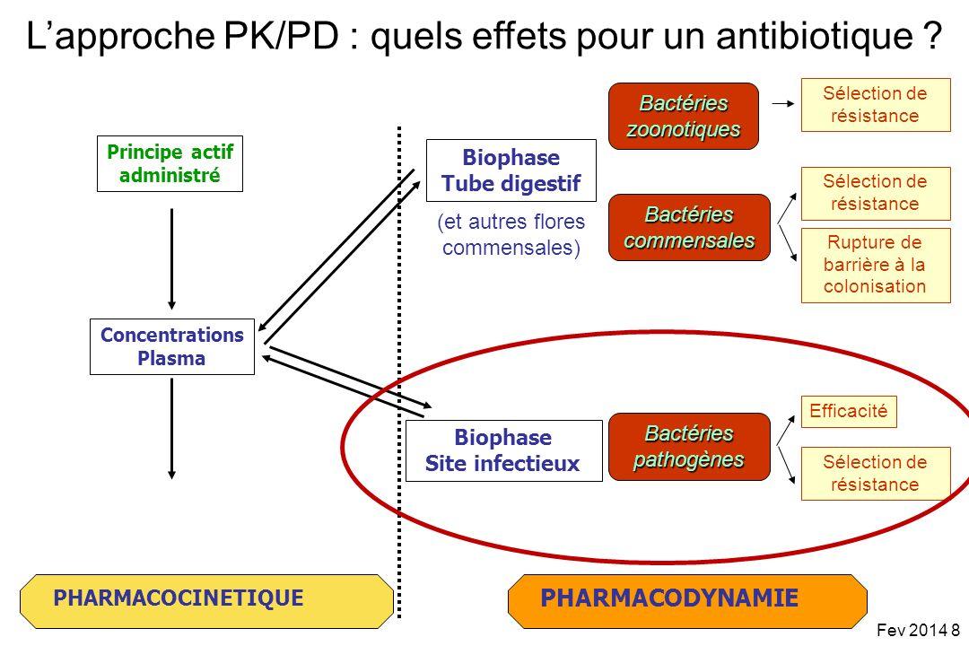 PHARMACODYNAMIEPHARMACOCINETIQUE ABSORPTION ELIMINATION DISTRIBUTION Concentrations Plasma Principe actif administré Réponse thérapeutique Concentrations Biophase CMI Vitesses de bactéricidie .