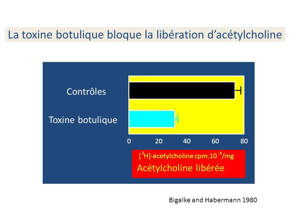 La toxine botulique bloque la libération dacétylcholine Bigalke and Habermann 1980 Contrôles 806040200 Toxine botulique [ 3 H]-acetylcholine cpm.10 -4