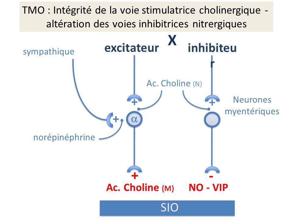 TMO : Intégrité de la voie stimulatrice cholinergique - altération des voies inhibitrices nitrergiques + + + sympathique X excitateur inhibiteu r Ac.