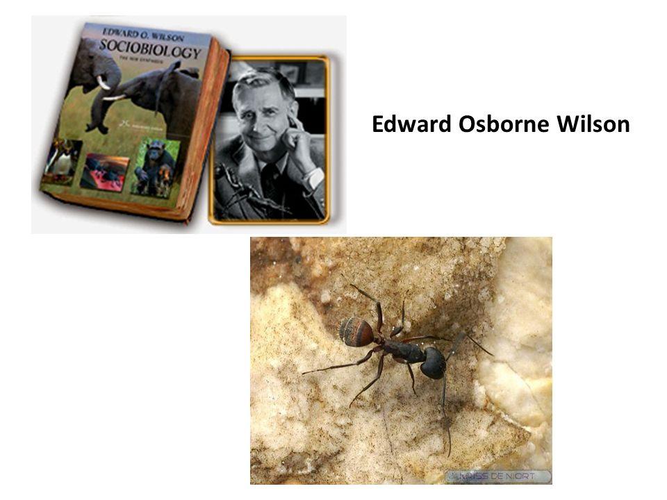 Edward Osborne Wilson