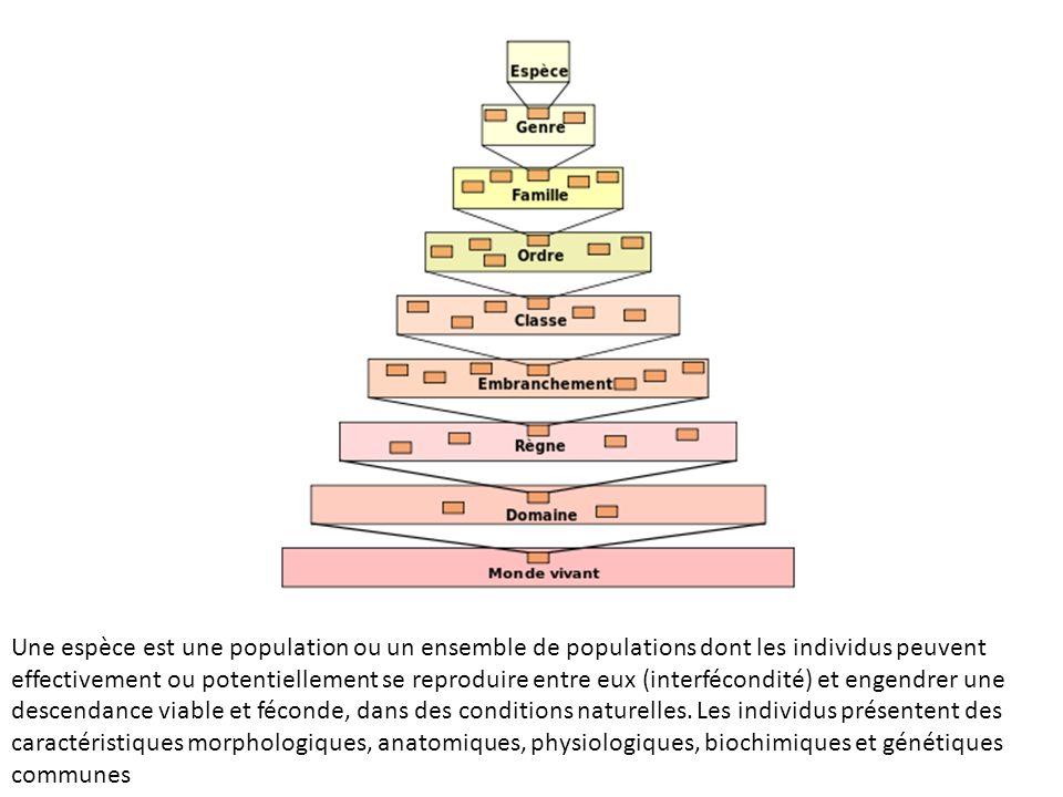 Une espèce est une population ou un ensemble de populations dont les individus peuvent effectivement ou potentiellement se reproduire entre eux (inter