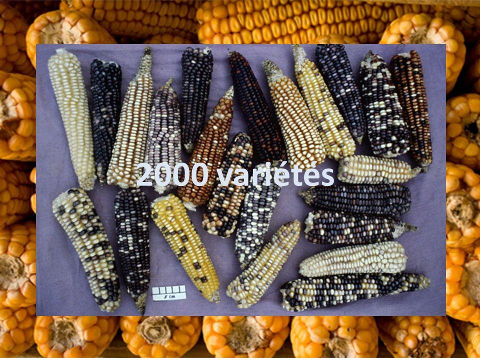 2000 variétés