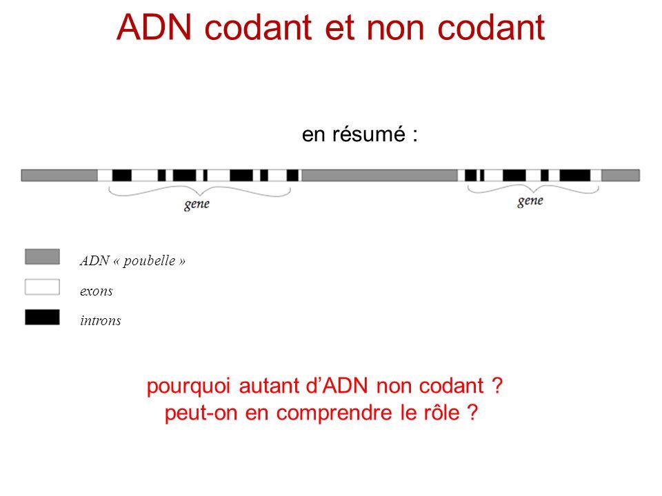 ADN codant et non codant ADN « poubelle » exons introns pourquoi autant dADN non codant ? peut-on en comprendre le rôle ? en résumé :