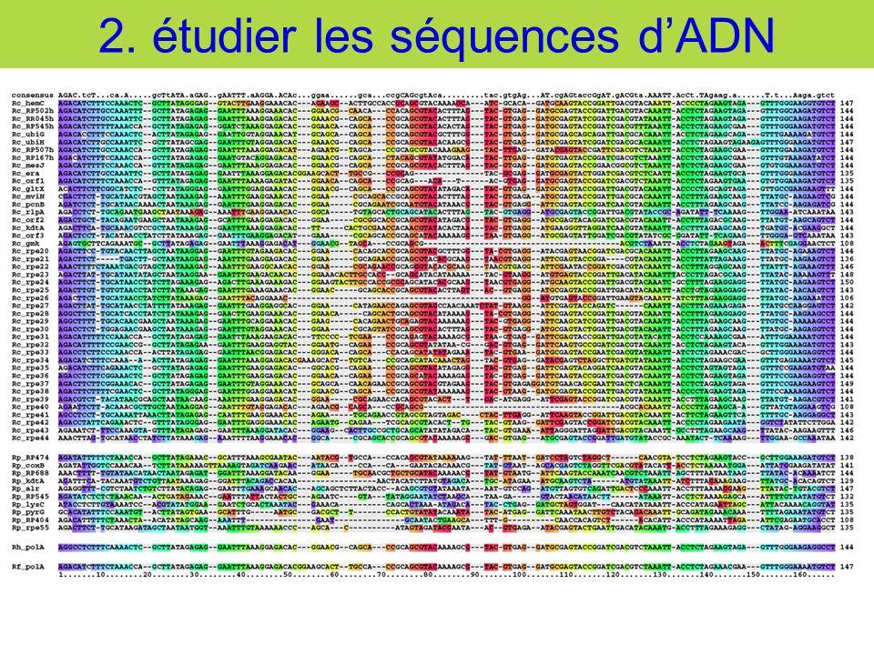 2. étudier les séquences dADN