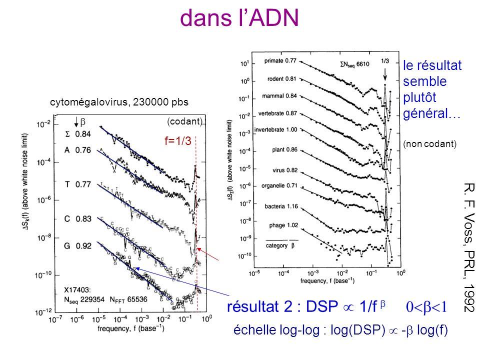 dans lADN R. F. Voss, PRL, 1992 (variation de la méthode : construction de 4 sous-séquences 0/1 pour A, T, C, G) résultat 1 : pic à f = 1/3 cytomégalo