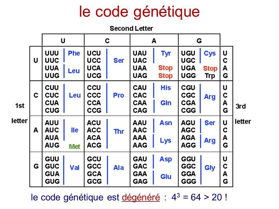 1 triplet = 1 codon = 3 lettres = 1 acide aminé le code génétique le code génétique est dégénéré : 4 3 = 64 > 20 !