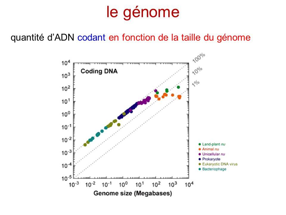 le génome quantité dADN codant en fonction de la taille du génome