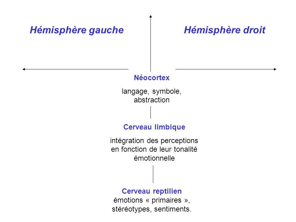 Cerveau reptilien émotions « primaires », stéréotypes, sentiments. Cerveau limbique intégration des perceptions en fonction de leur tonalité émotionne