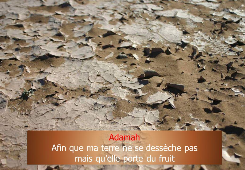 19 Adamah Afin que ma terre ne se dessèche pas mais quelle porte du fruit