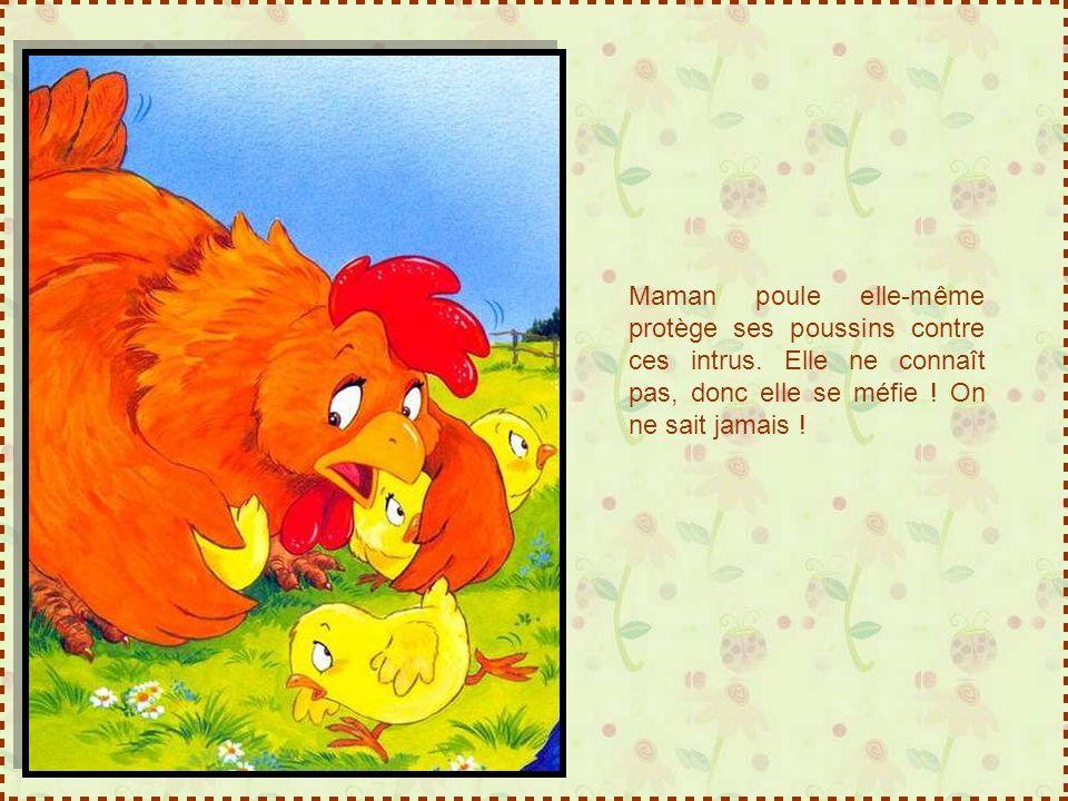 Maman poule elle-même protège ses poussins contre ces intrus.