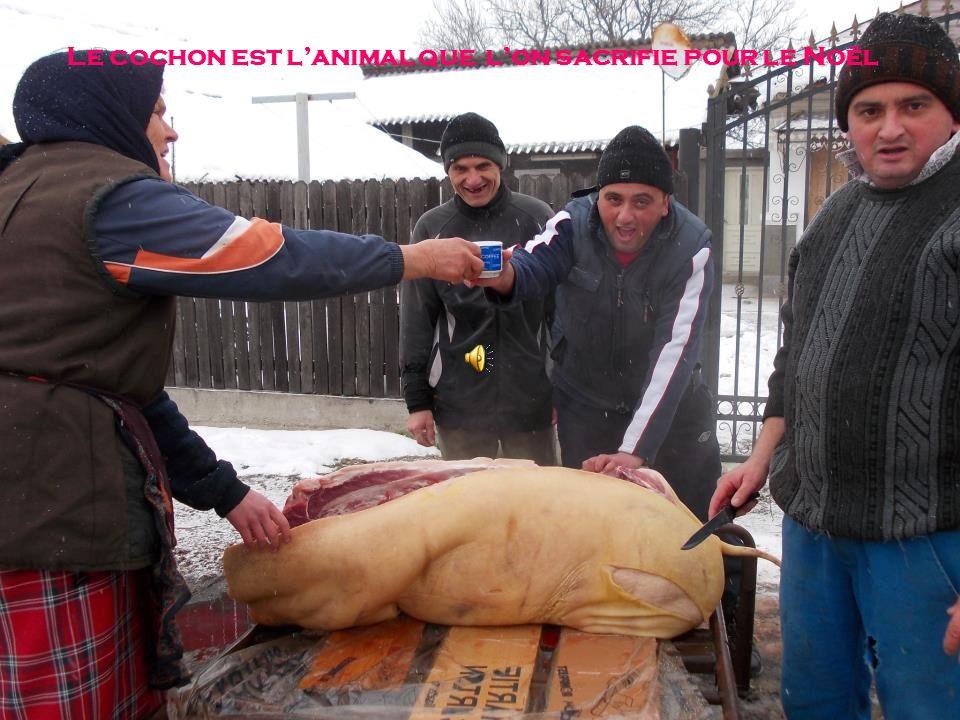 Le cochon est lanimal que lon sacrifie pour le Noël